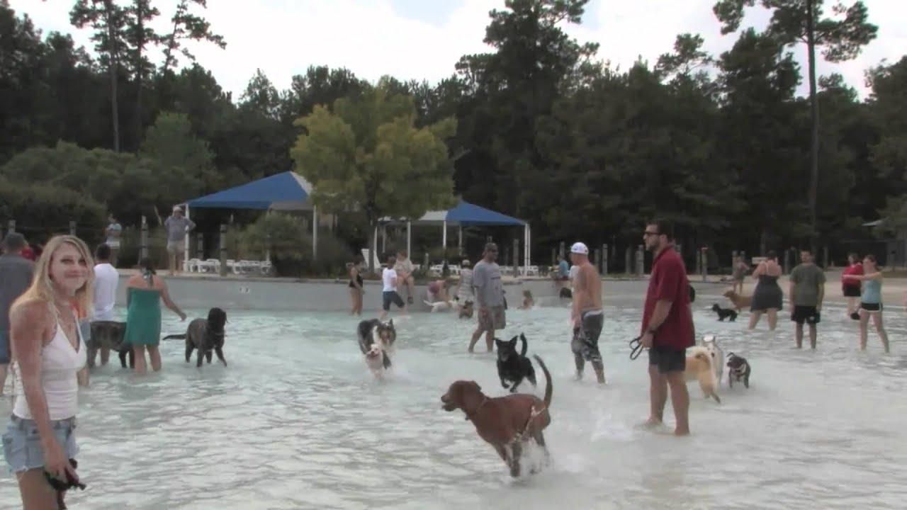 Dog Kennels Charleston Sc