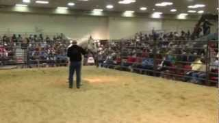 Repeat youtube video Chicks Dash Easy AAA AQHA Stallion