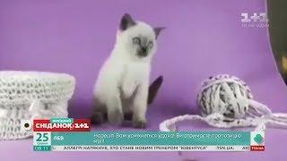 Веселі відео домашніх улюбленців від глядачів Сніданку