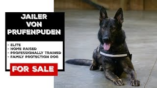Sale Brochure For 'Jailer Von Prufenpuden' An Elite Family Protection Dog For Sale