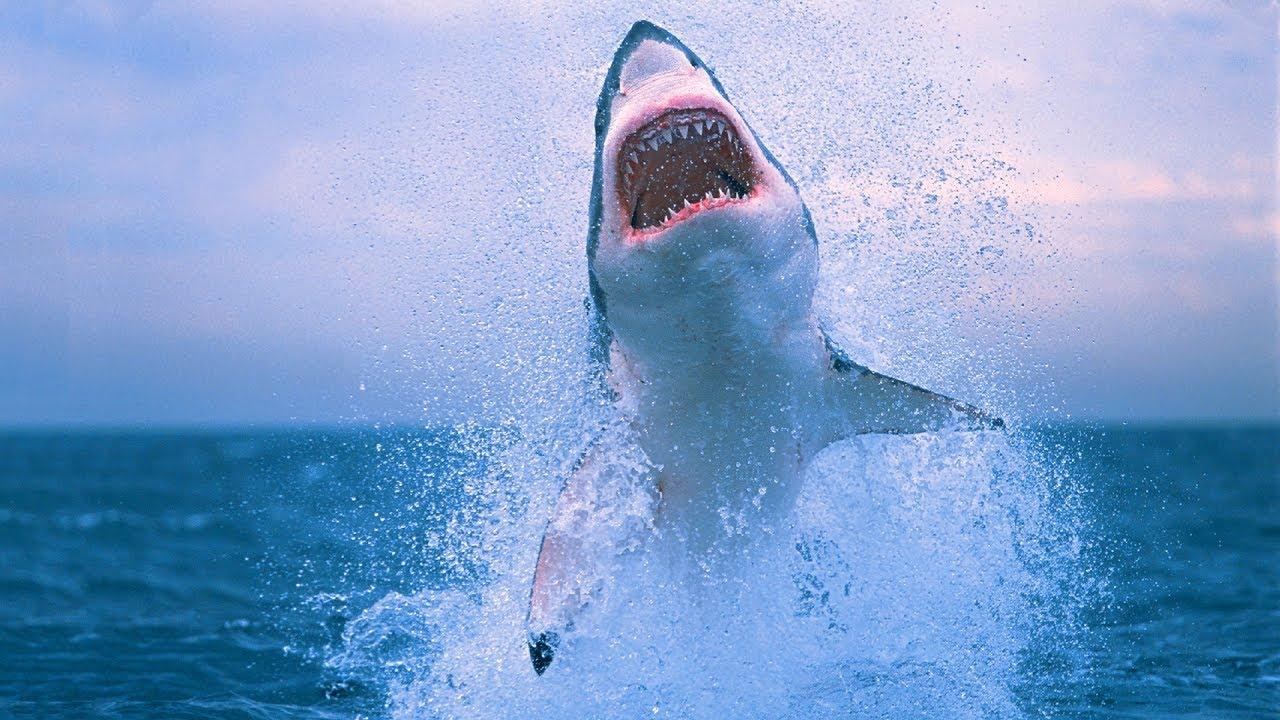 Shark Attack Summer 2017