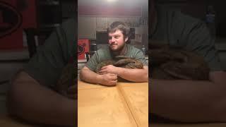 Dog Jealous of Owner Cuddling Bunny - 985377