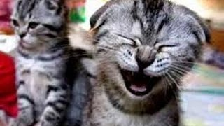 Приколы с котами на СУПЕР ПРИКОЛАХ !