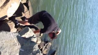 San Diego Bay - Spanish Landing - How to NOT land a large Bat Ray