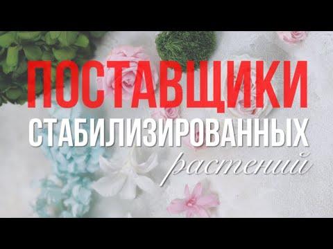 Поставщики стабилизированных растений   Часть 1   Где не покупать цветы и где покупать