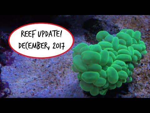 Reef Update - Both Tanks! - December, 2017