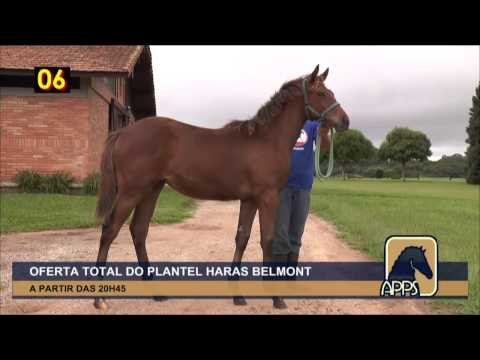 Leilão APPS 16/02/2017 - Haras Belmont