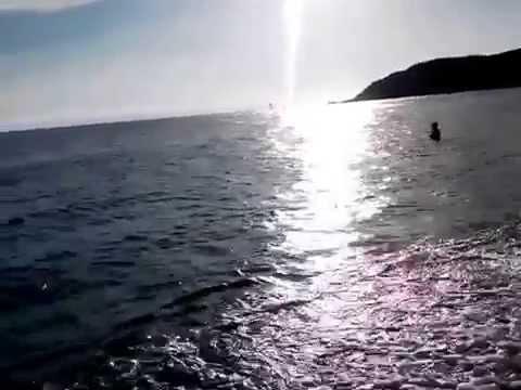 Delfini a SOLANAS - Sardegna