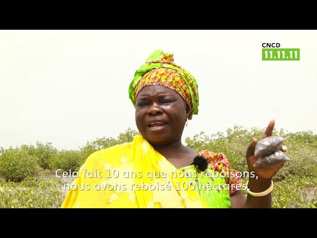 Sénégal : Il faut sauver la mangrove
