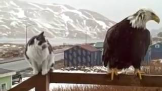Gambar cover Amazing!! Eagle life with cat and people