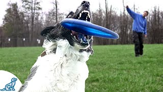 Disc Dog Training - Learn To Throw Like A Pro - Professional Dog Training Tips
