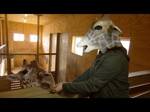 Thumbnail: Mom Who Livestreamed Labor With Giraffe Mask Meets April at Zoo