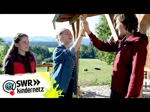Enya Vermisst Den Schwarzwald Tiere Bis Unters Dach Swr Kindernetz Youtube
