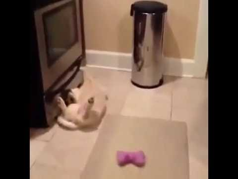 Cute puppy playing dead | Vine
