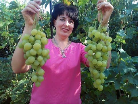 Виноград Великолепная Семерка. Саженцы и черенки винограда.Тел-0677605952.