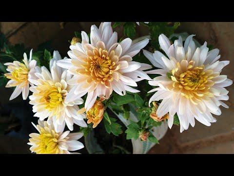 Best Winter Plants To Buy From Nursery || Must Have Winter Plants || Fun Gardening