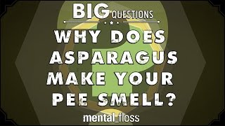 Why does asparagus make your pee smell? - Big Questions - (Ep. 22)