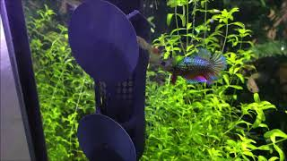 Обогреватель в аквариум