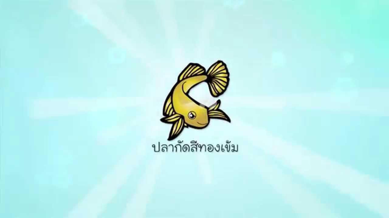 [Clip] Animals speak : วิธีเพาะพันธุ์ปลากัดสีทอง โดยลุงอ๋า คนแรกที่เพาะพันธุ์ปลากัดสีทอง