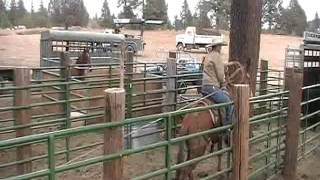 2012 Red Bluff Gelding Sale Consignment