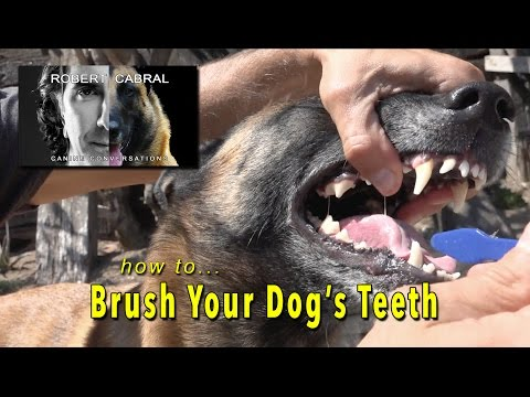 Brushing Your Dog's Teeth - Dog Grooming and Health