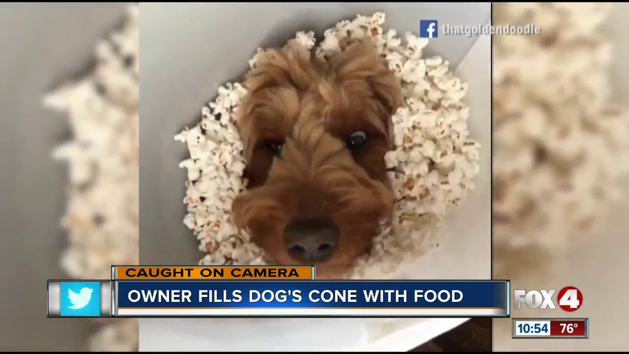 dog owner puts food in cone of shame youtube