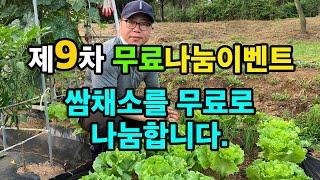엔피오 주말농장 나눔 이벤트 #09차 - 쌈채소를 공짜…