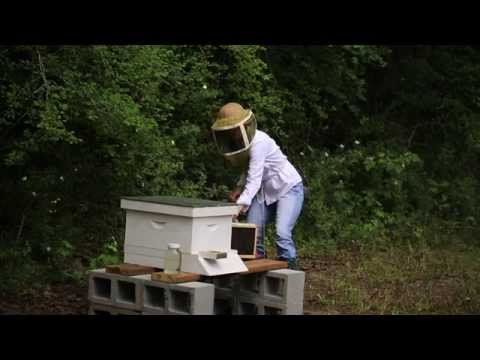 How to Put Box Bees and their Queen in the Hive