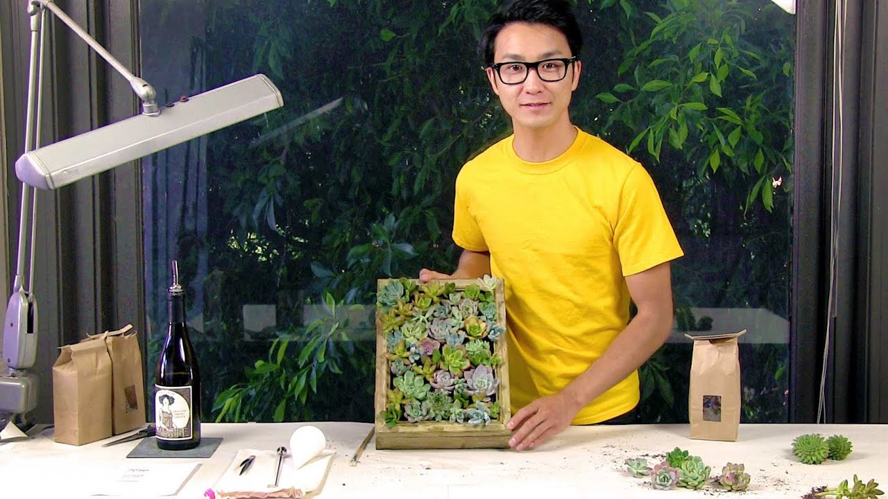 how to make a living picture frame with succulents