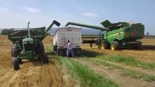 June 2015 Wheat Harvest Kinsinger Farm Stuarts Draft,Virginia