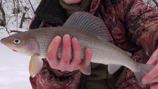 Хариус зимой Рыбалка на лесной реке Ленинградская область 2021 г
