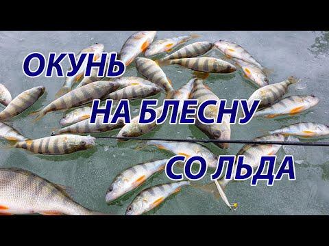 Окунь на блесну Маропедка. Открытие зимней рыбалки сезон 2020-2021