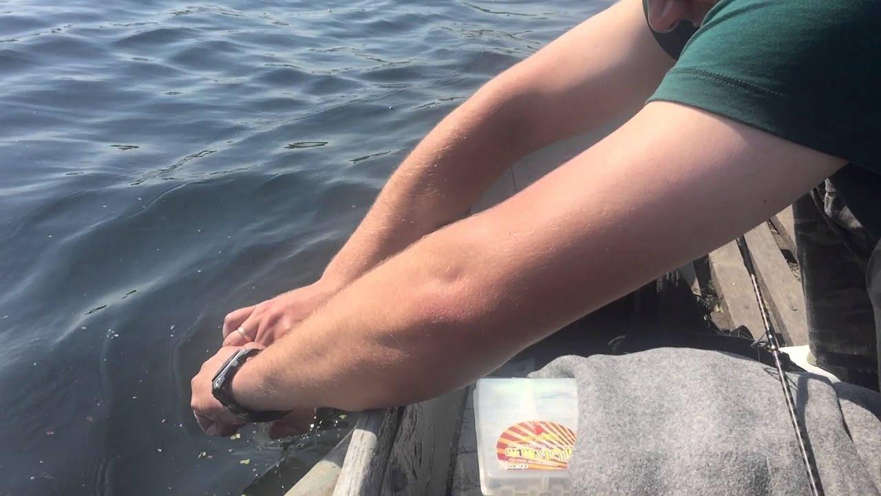 как ловить толстолоба со дна