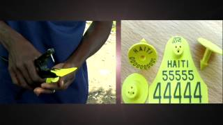Spot Idantifikasyon Bef Ayiti