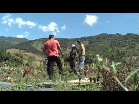 MINERIA: LA PERDIDA DE UNA COSECHA (S. Rafael las Flores - Guatemala)