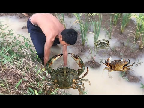 Smart Boys Catching Crab At The Mud - Real Life Catching Crabs At The Mud