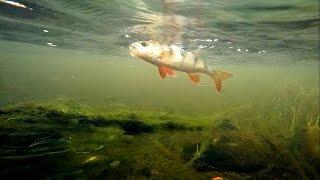 Fishing: testing micro-spoons for perch trout pike. Рыбалка микро-колебалки для окуня форели щуки.