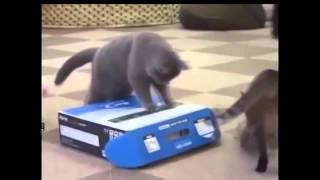 Животные издеваются над людьми))) прикол не риальный