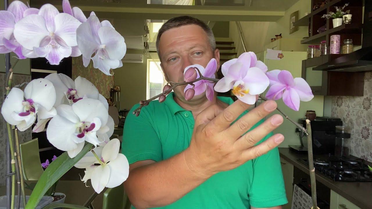 ЦВЕТОНОС ОРХИДЕИ быстро зацвёл после пересадки в ЭТОТ грунт для орхидей