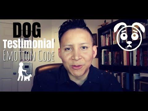 A Dog Testimonial Using the Emotion Code