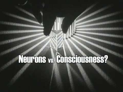 A Glorious Piece of Meat: The Neural Basis of Consciousness