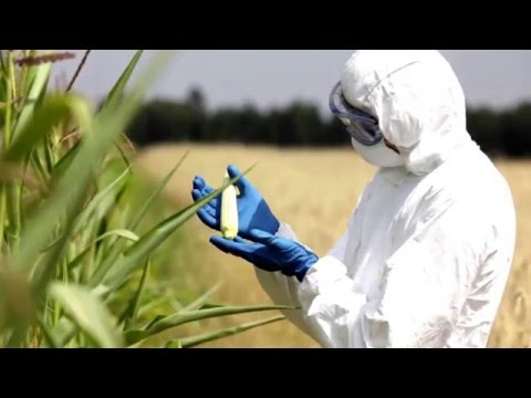 Genetically Modified Foods the need for Regulation