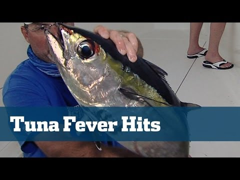 Blasting Tuna In The Bahamas Yellowfins And Blackfins With Crazy Bird Action