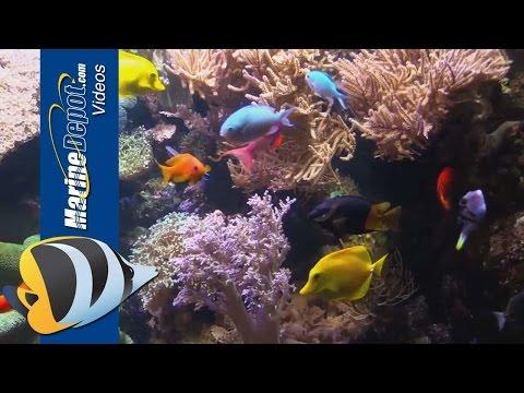 New Life Spectrum Aquarium Fish And Coral Foods