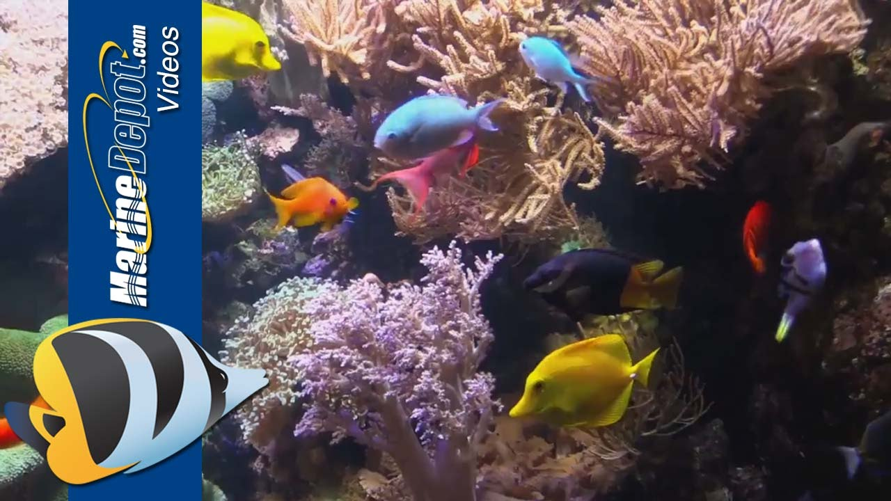 New Life Spectrum Aquarium Fish and Coral Foods Thumbnail