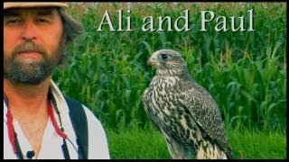 Ali and Paul, training a Gyrfalcon. A Binary Recording Studio Production, Bellingham Wa.