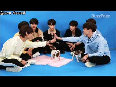 Arabic sub BTS Plays With Puppies While Answering Fan Questions ( Link In description )