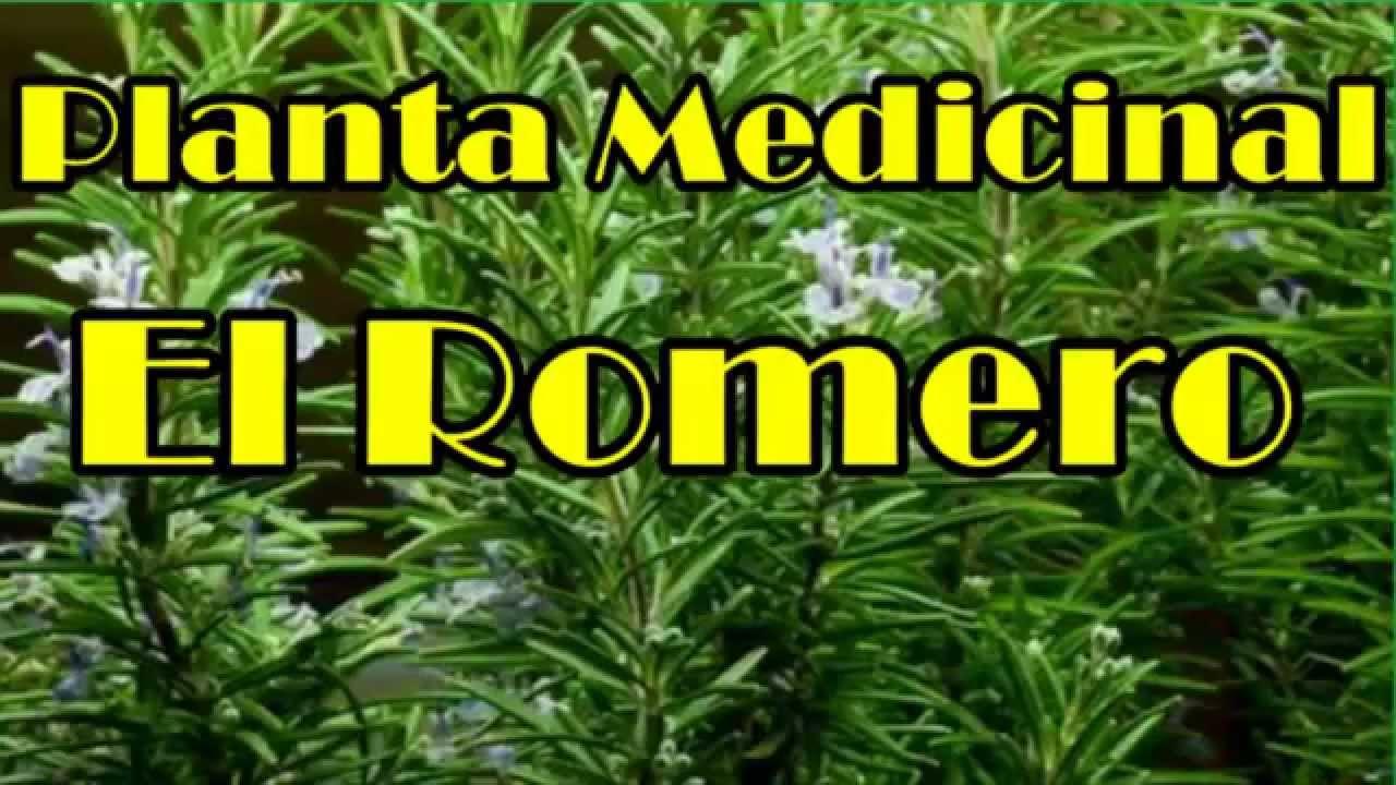 El romero planta romero planta milagrosa con muchas for Planta decorativa con propiedades medicinales