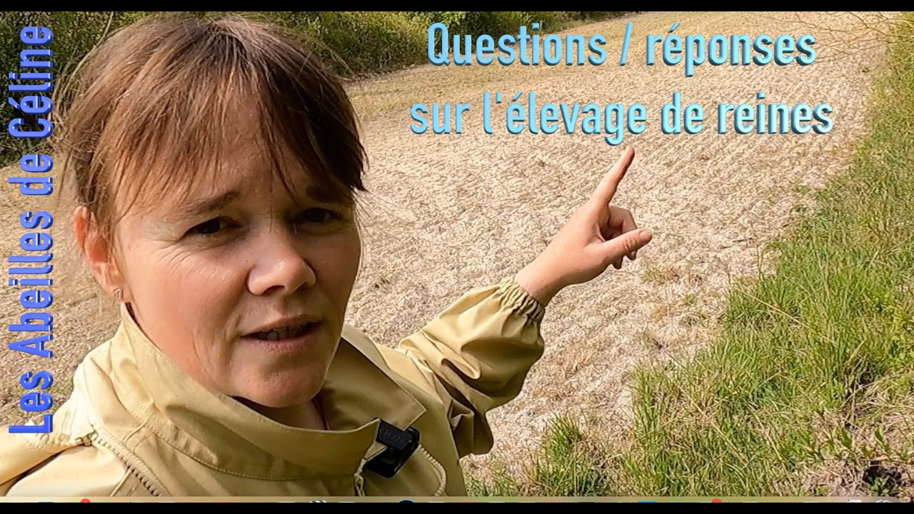 2 mai 2021 Questions/réponses sur l'élevage de reines.