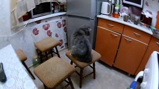Как кот ловит мышь
